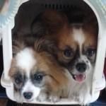 sheyma's dogs